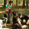 Hundetraining in der Gruppe