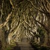 The Dark Hedges - Nordirland