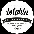 dolphin-photography