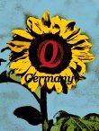 q-germany-i-m-gmbh-import-export